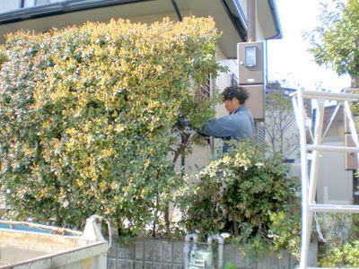 hirakatashikitayama1%20higuti25.JPG